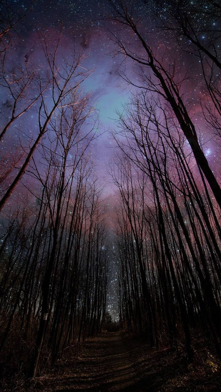 Starry Forest Sky