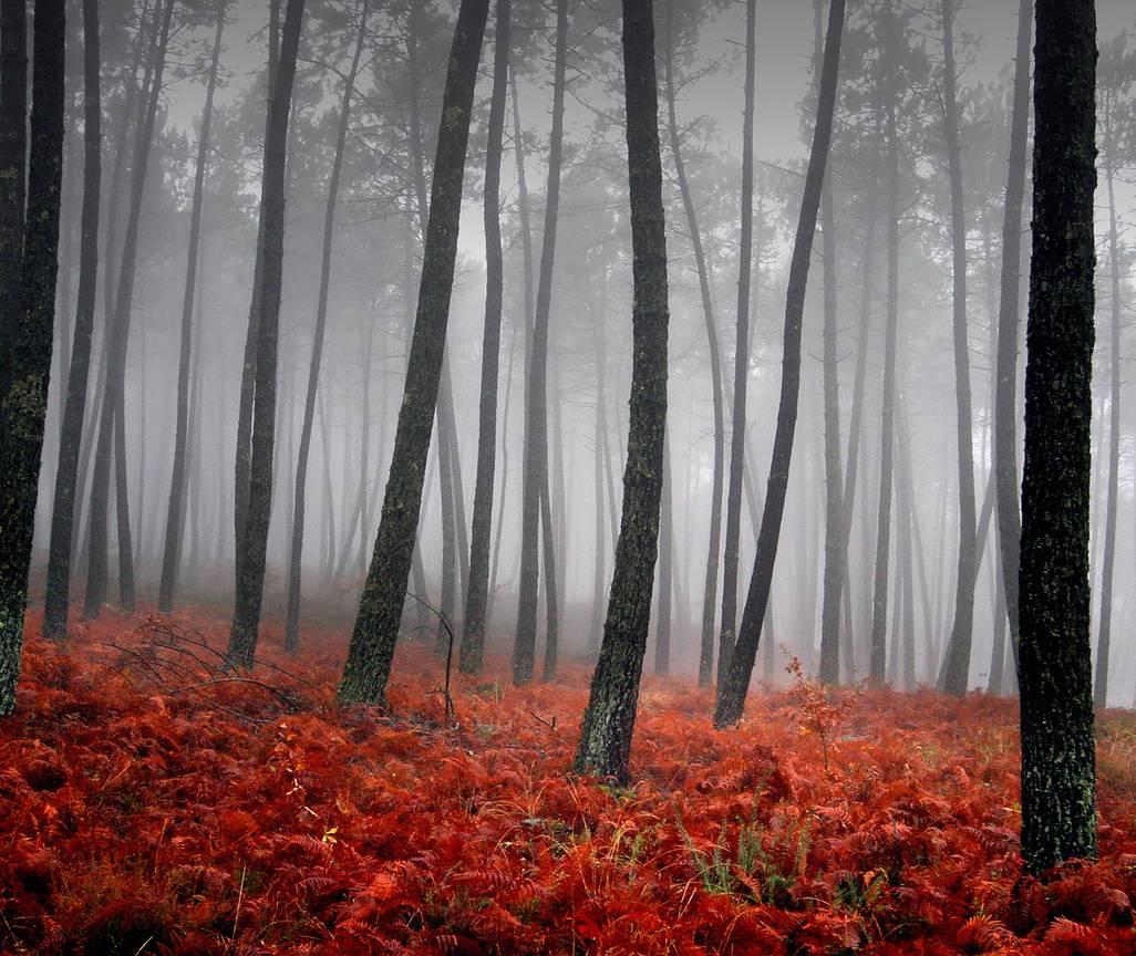 Autumn Hd