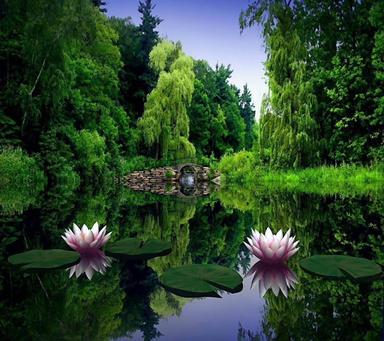 Lilies flower lake