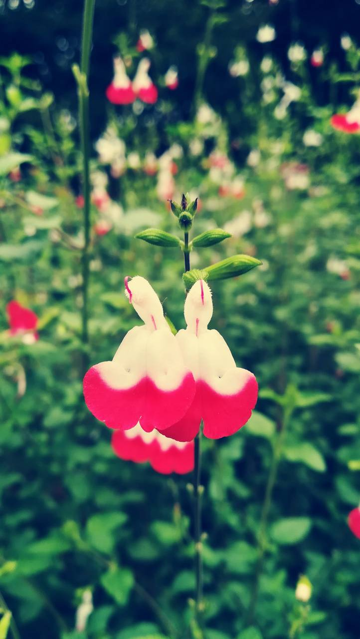 Peculiar flowers