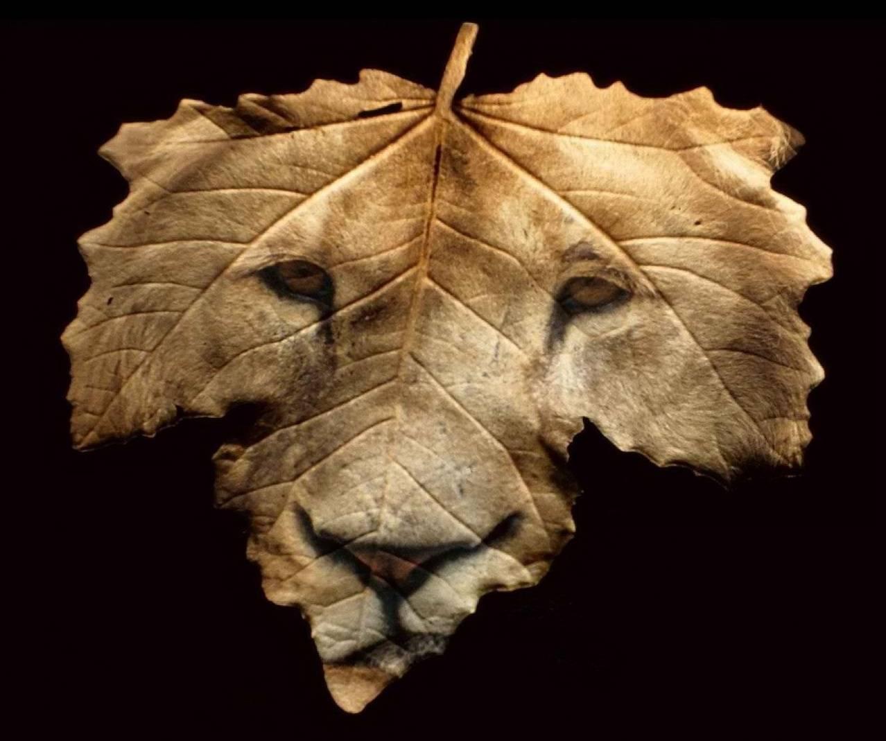 grrr leaf