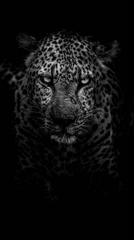 Beautiful Wallpaper Tiger Black And White Pictures Theme Walls