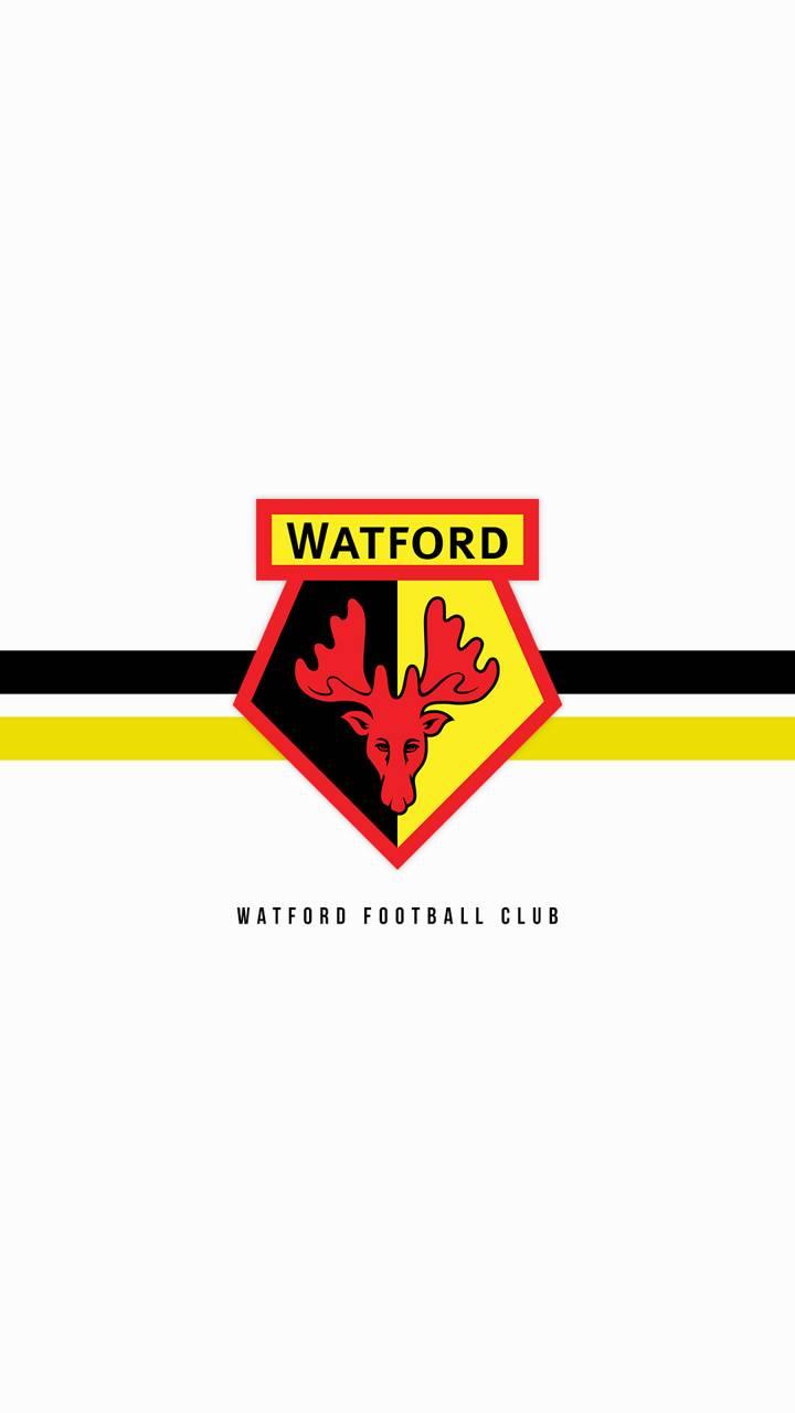 Watford White
