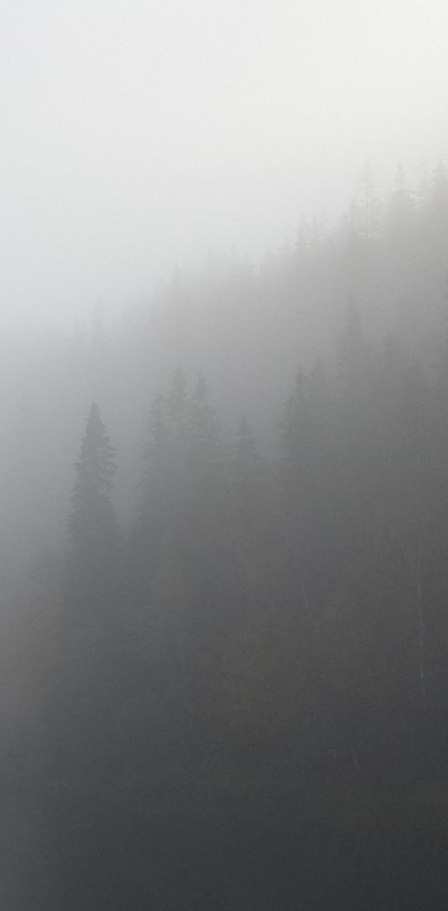 Foggy woodlands