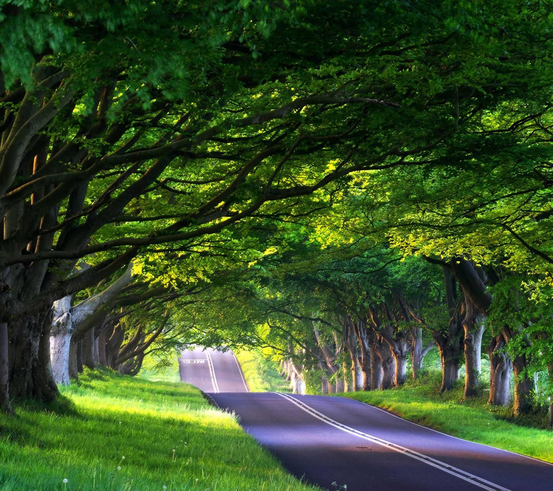 Nice Road View