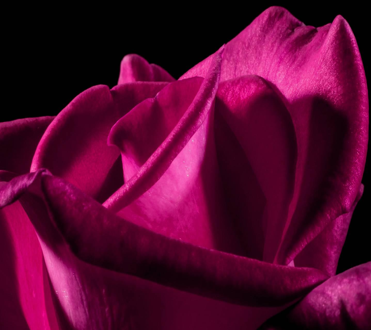 rosey pinky
