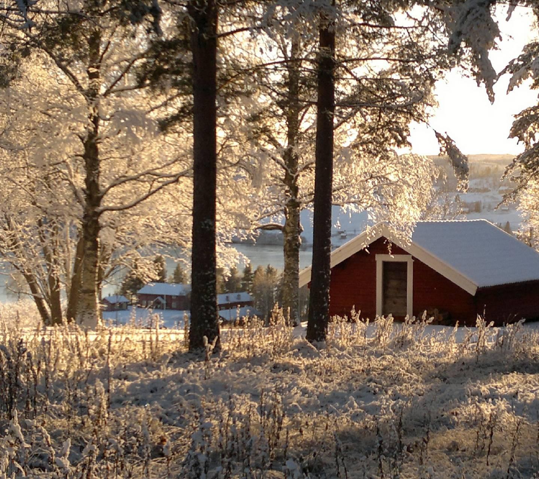 Cold Winter 2