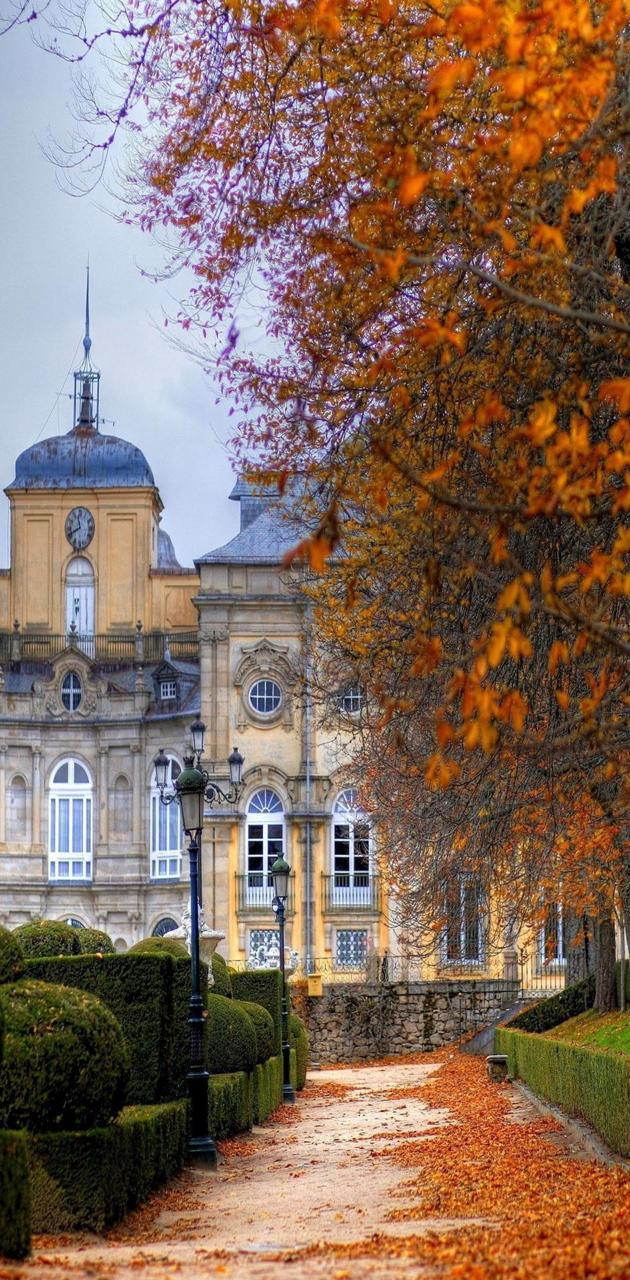 Autumn trees city