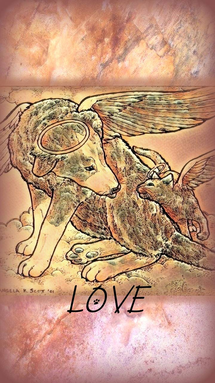 Dog Cat Angels Love