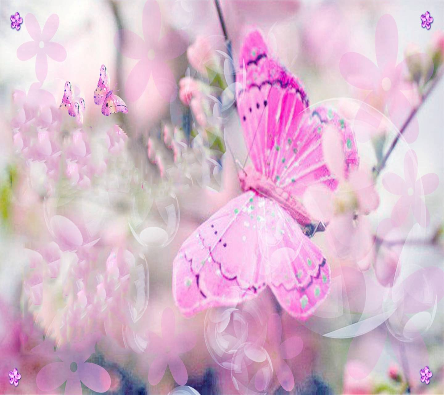 Pink Butterfly Wallpaper By Savanna Da Free On Zedge