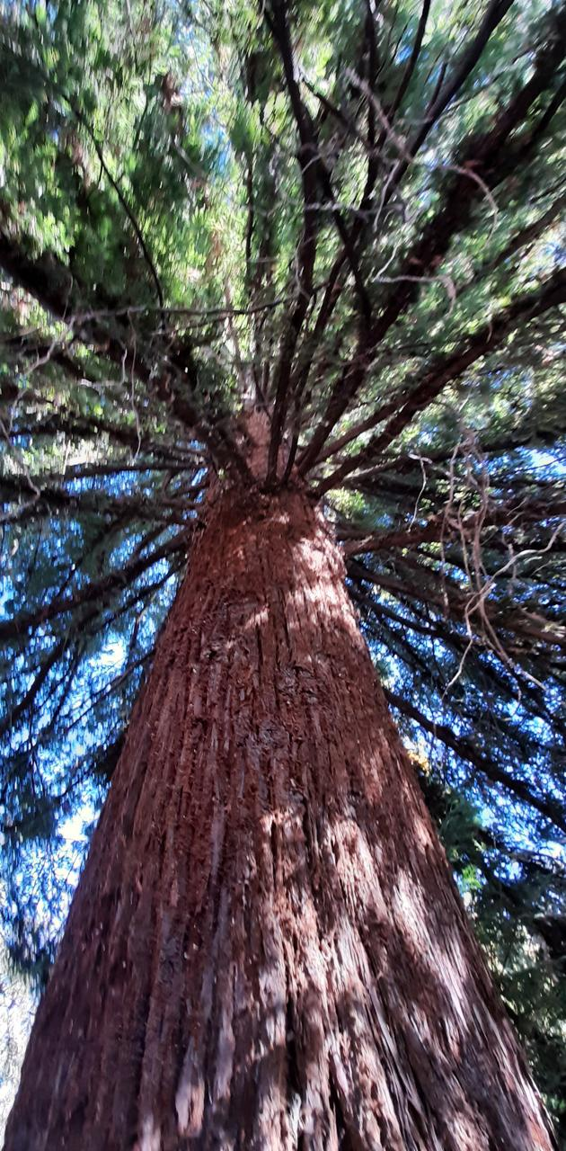 Tree Branchs