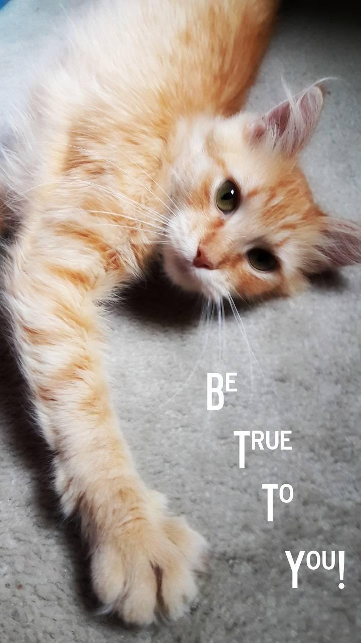 True to You Cat