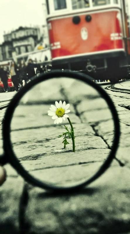 Zoom Flowers 4K