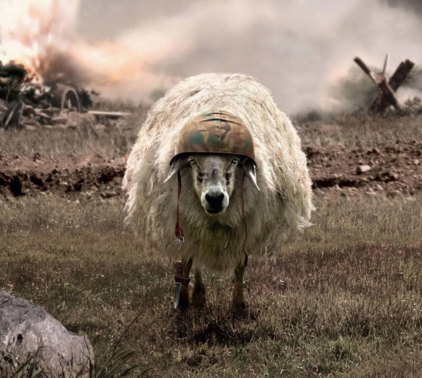 War Sheep