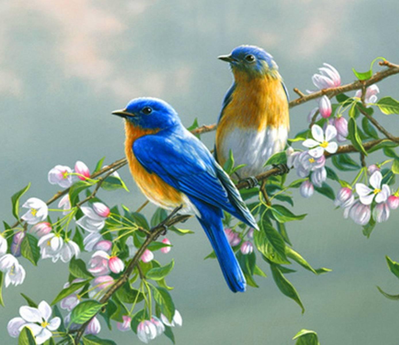 Казанская, картинки гиф анимация птица