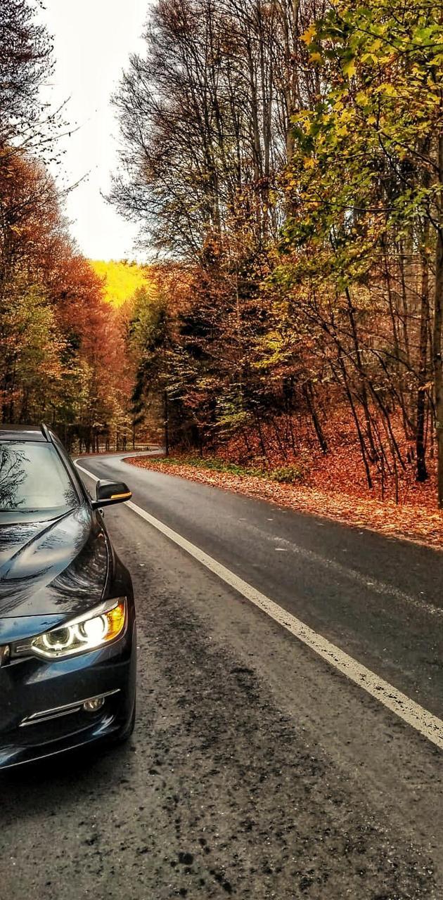 Bmw autumn in forest