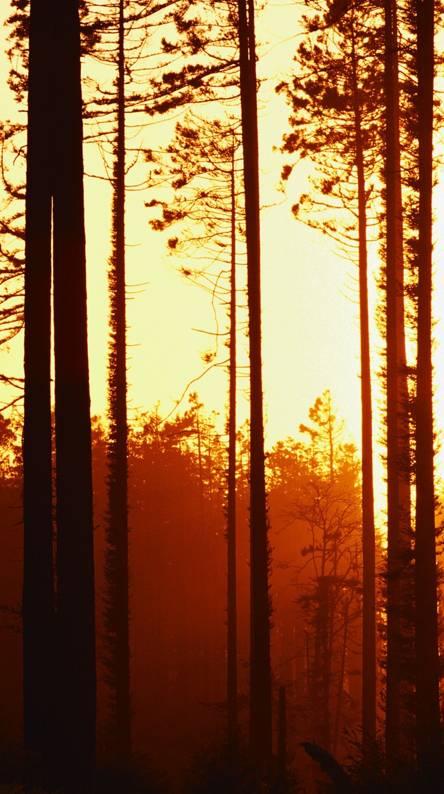 Autmn Forest
