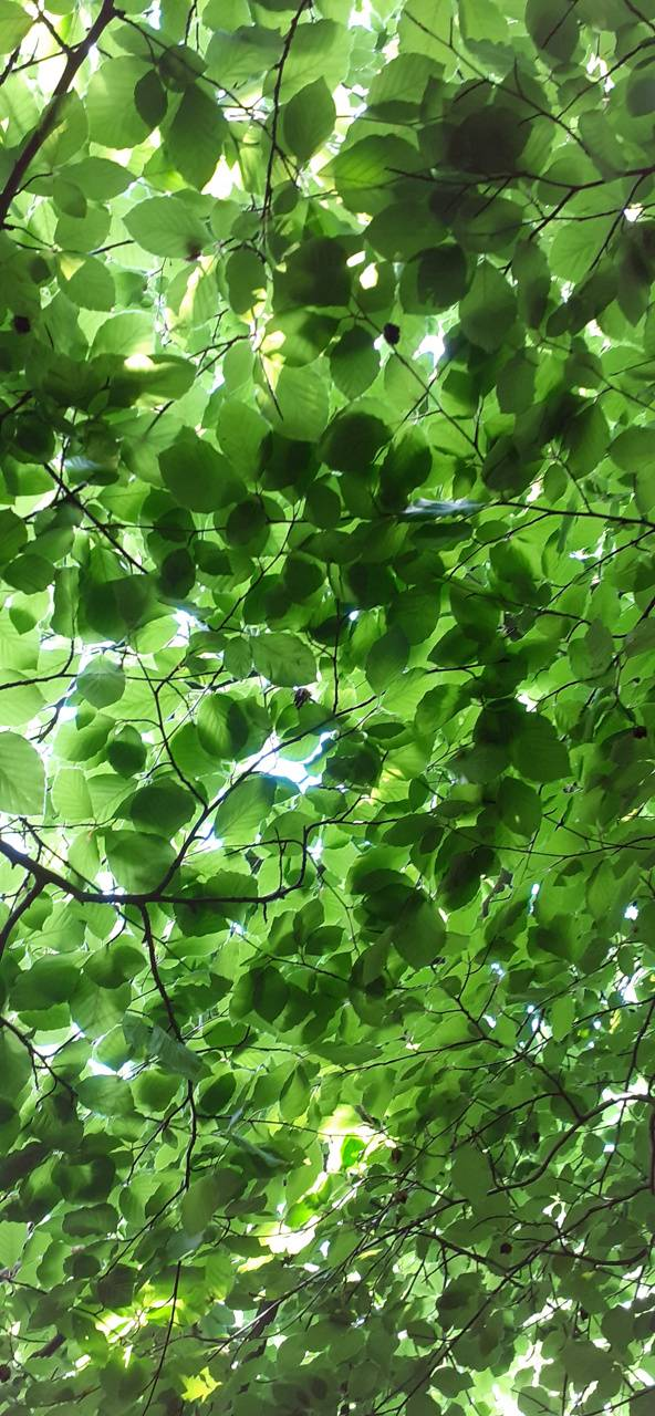 Leafy roof