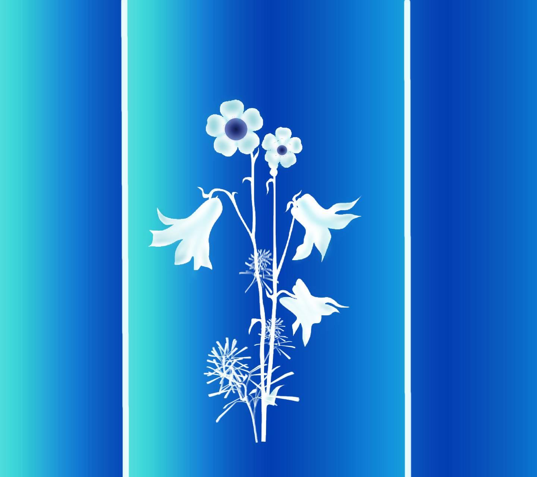 Flower on blue