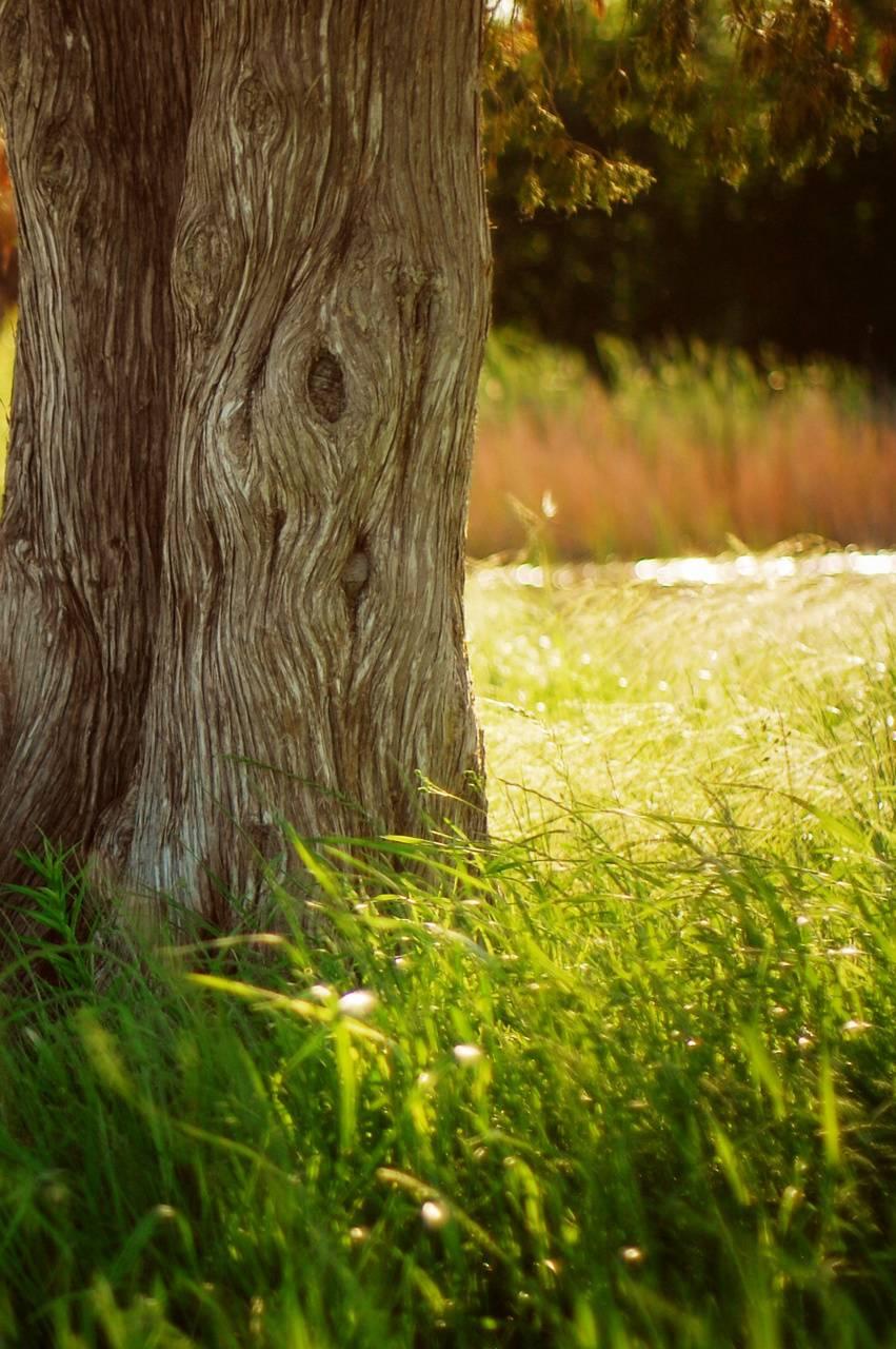 Tree458