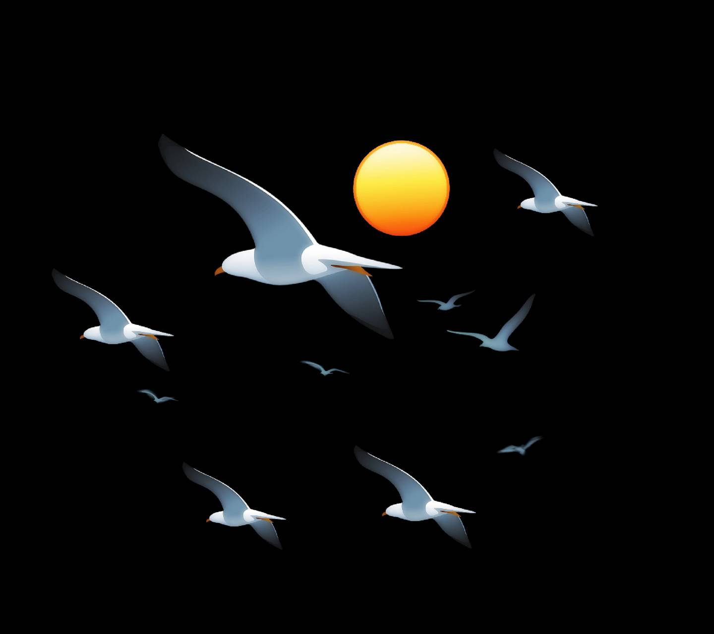 Birds in sky 2