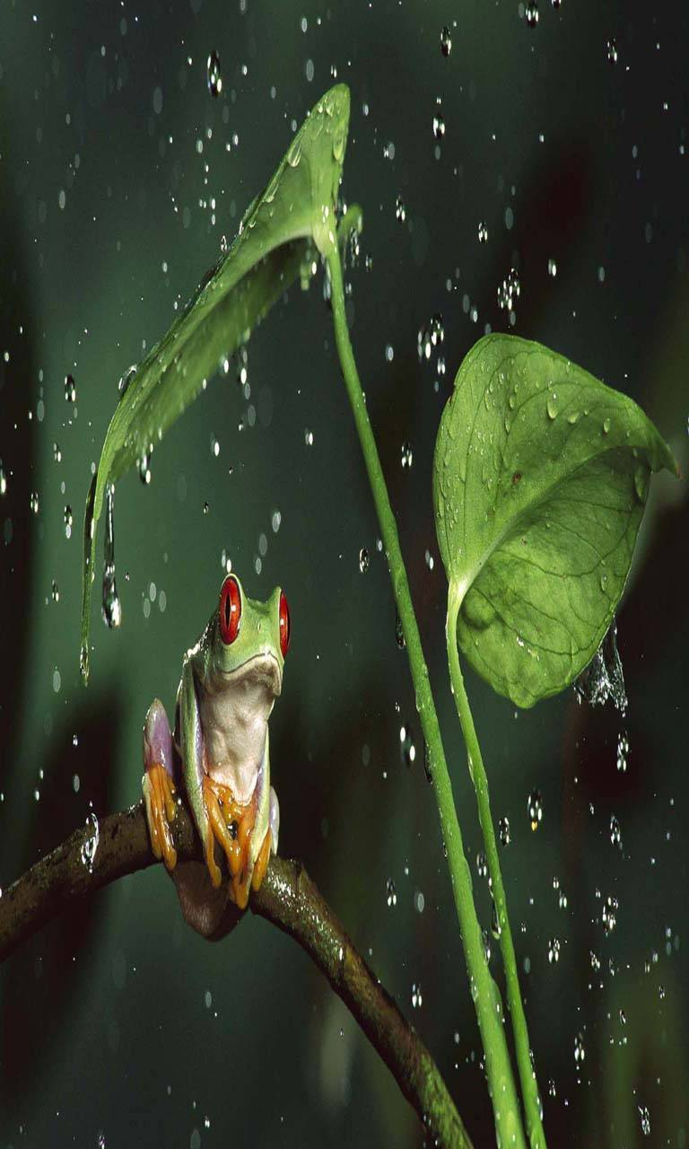 Rainy night frog