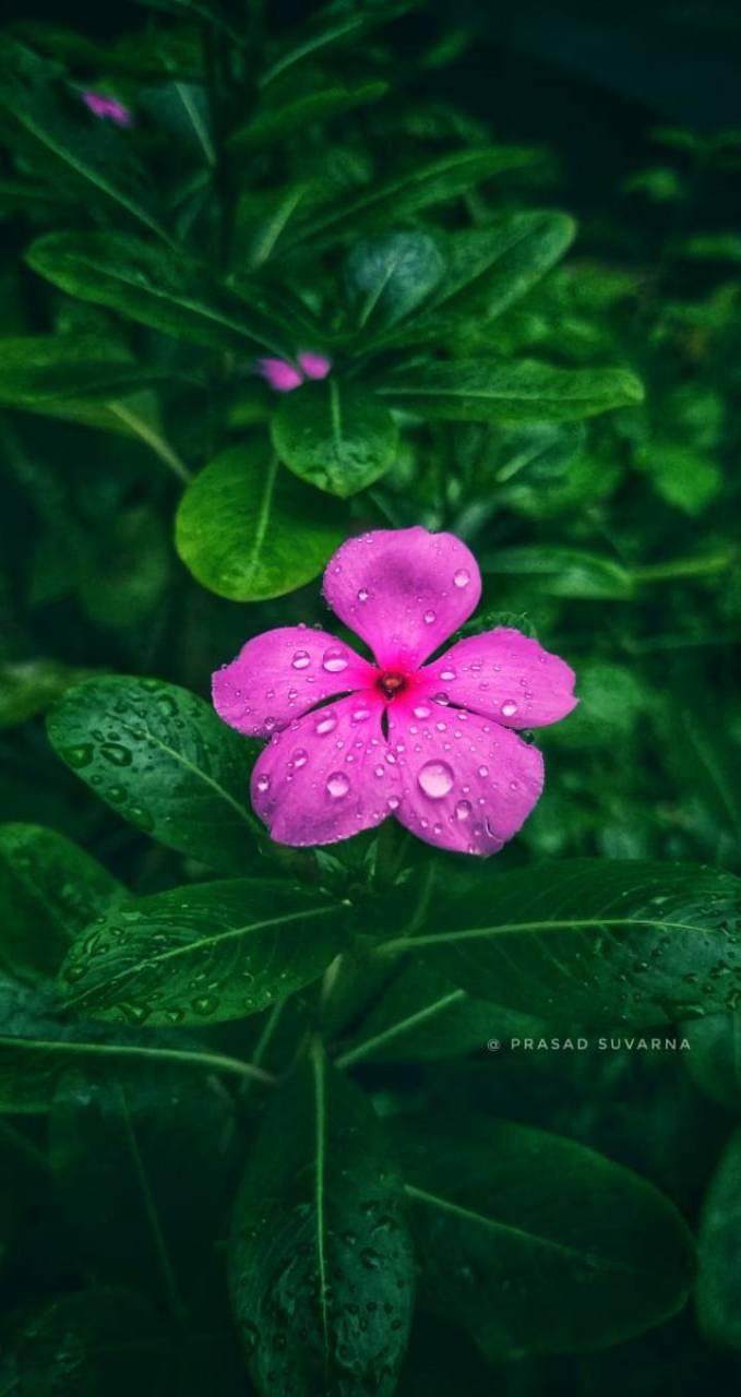 Flower94