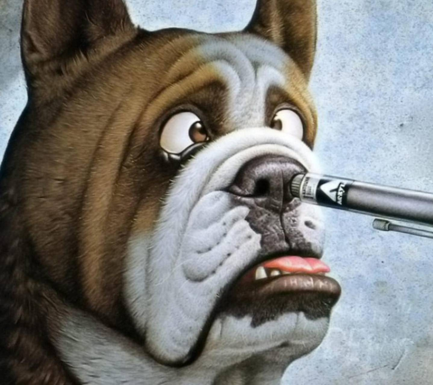 Funny Dog wallpaper by _lovey_ - 64