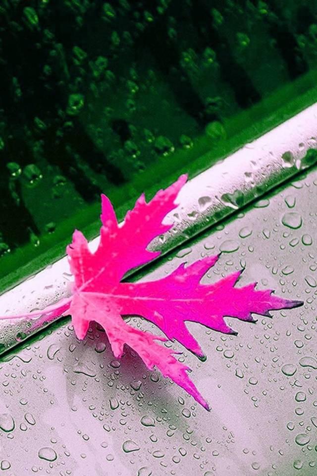 hd pink leaf
