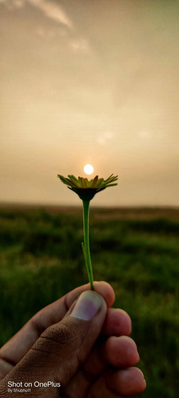 Sunset on Flower