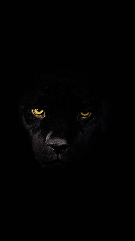 200+ Wallpaper Hd Black Tiger HD Gratis
