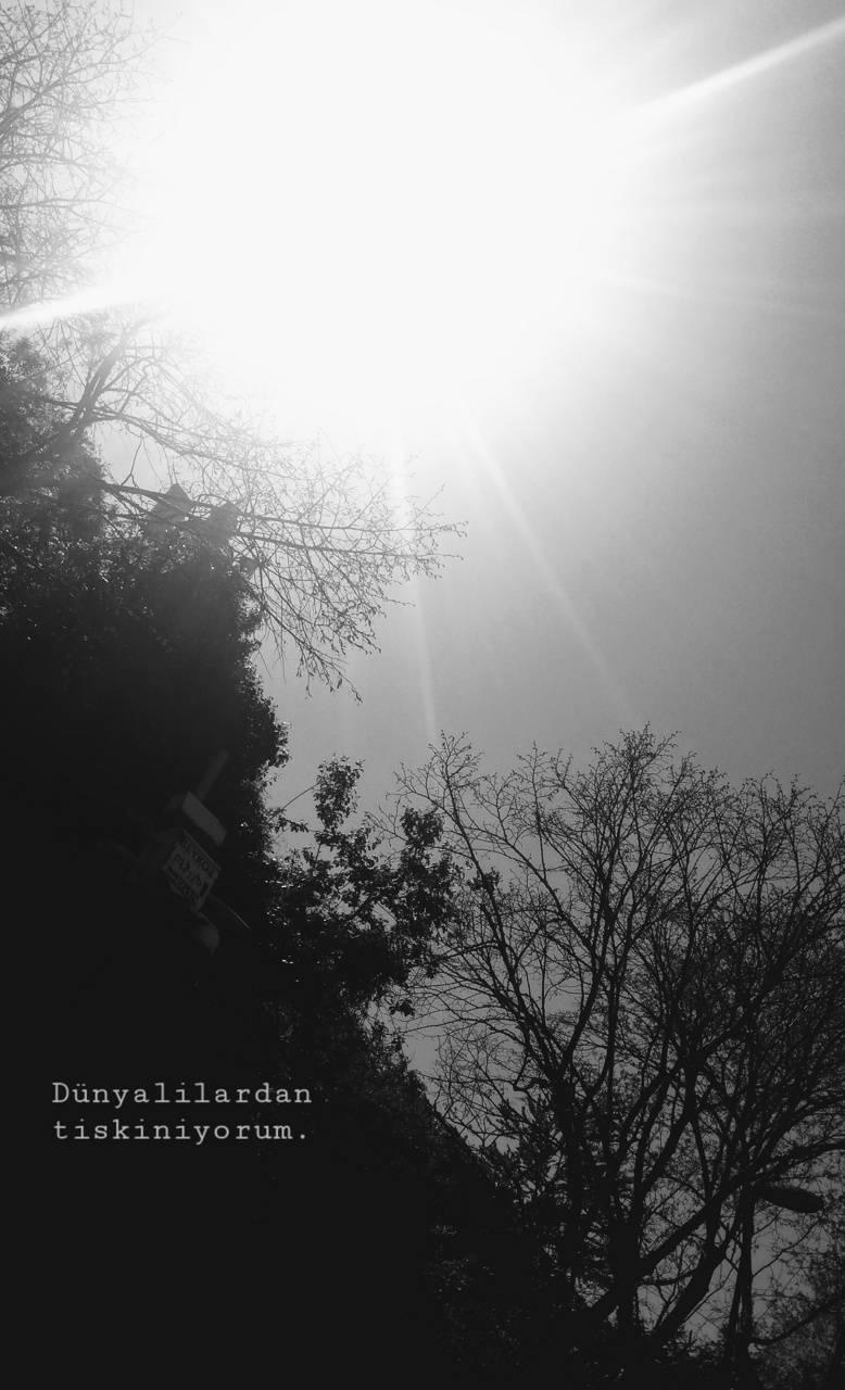 Dunyalilar