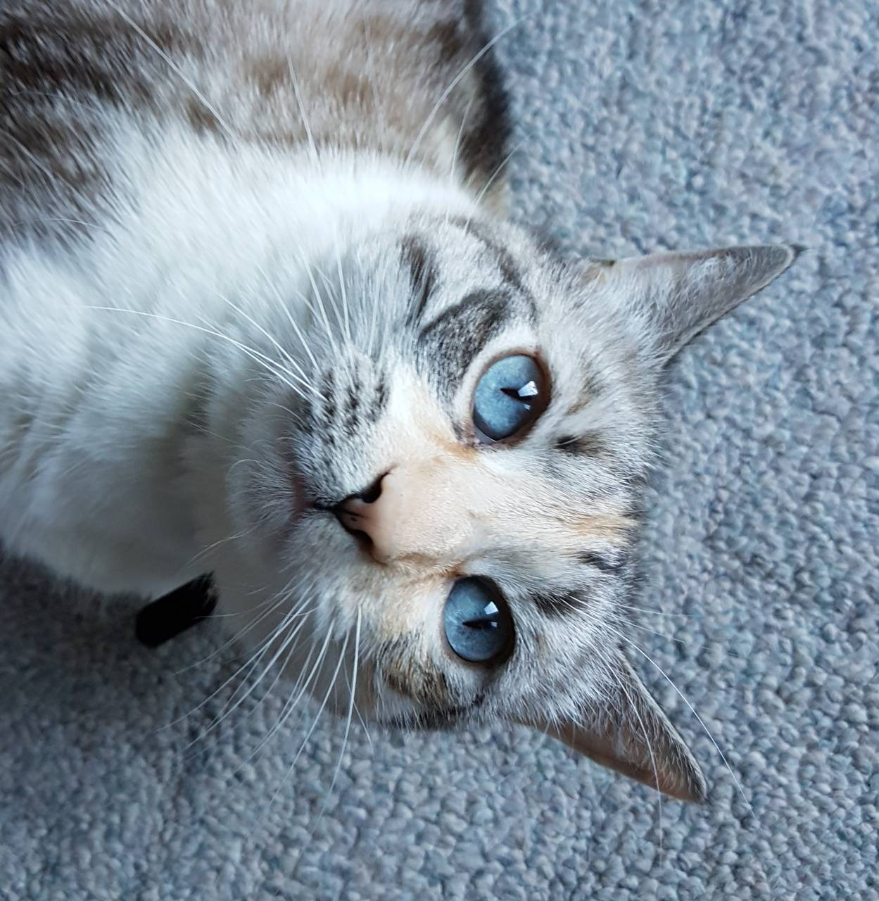 Miss Blue Eyes