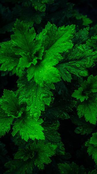 4k leafs
