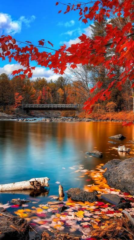 Silence Nature