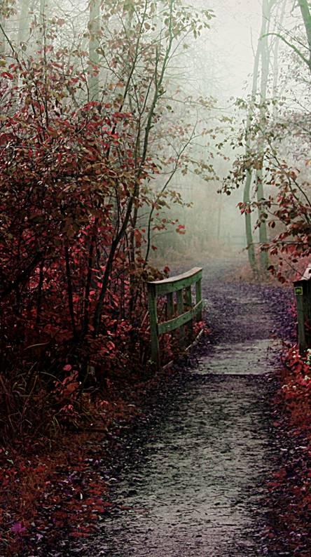 Pink Autumn Mist