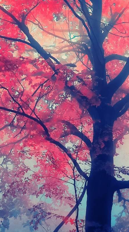 Red Tree Hd