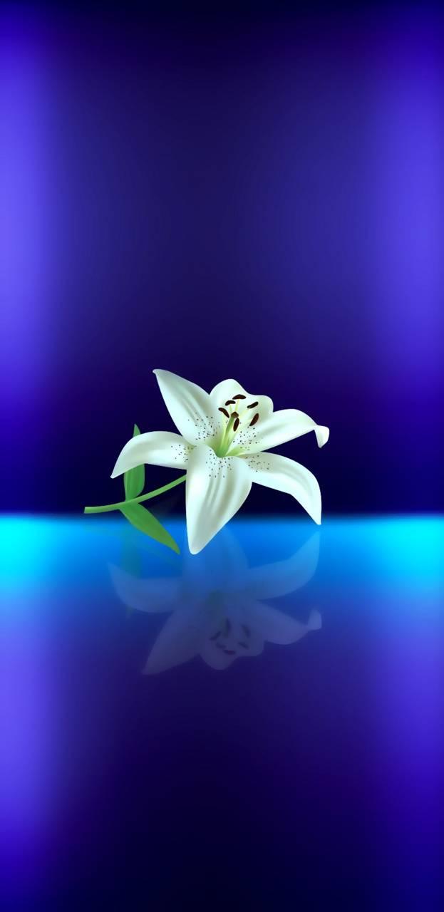 Color flor