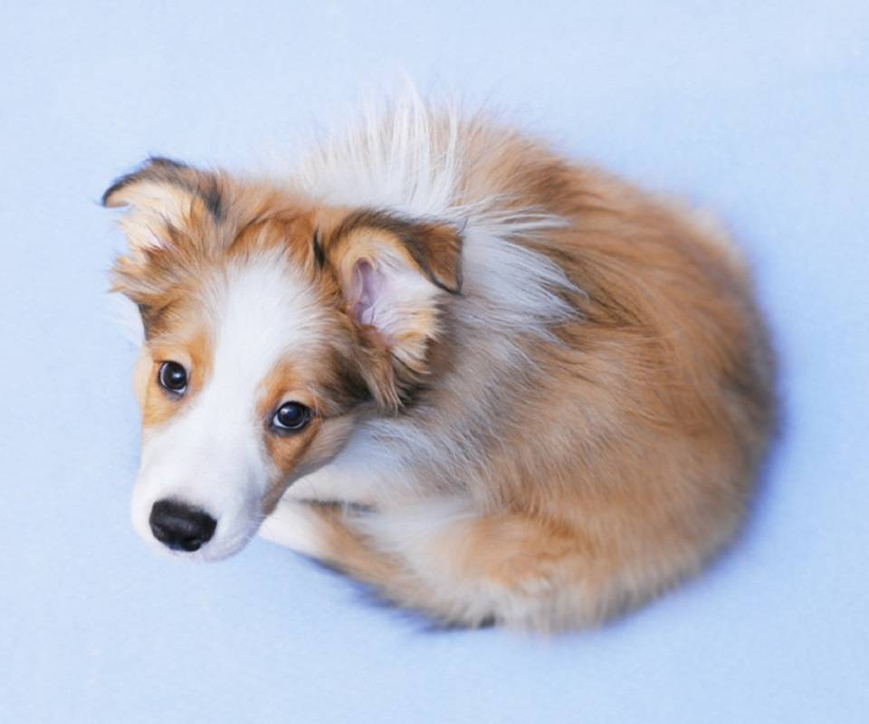 A ball of Puppy