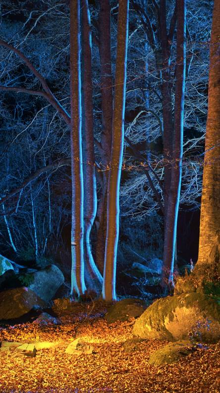 Illuminated Forest