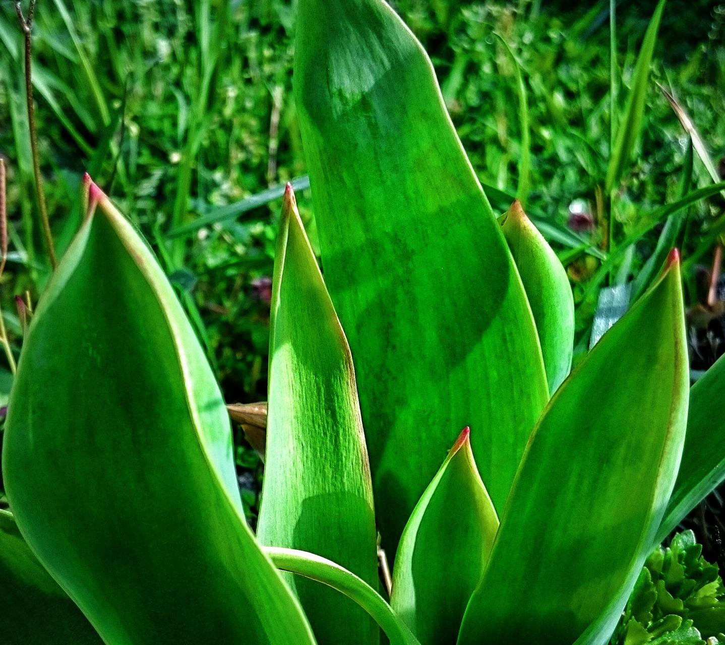 Green green flower