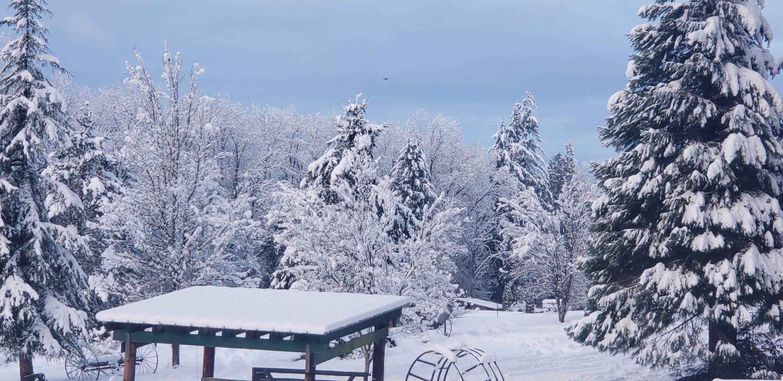snow meadow