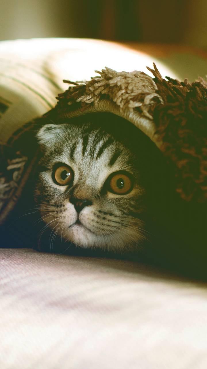 Shh Im Hiding