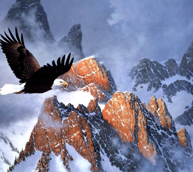 eagle--------------
