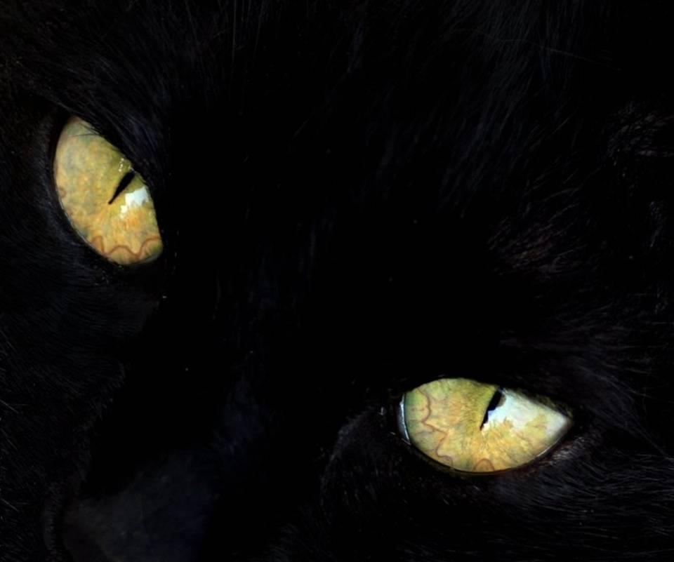Peering Into Darknes