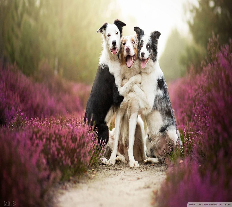 dogsfriends