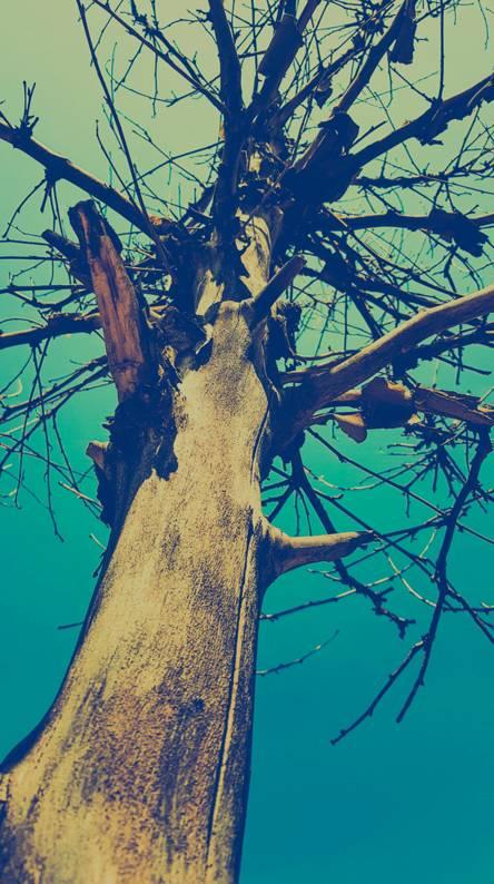 Dryed tree