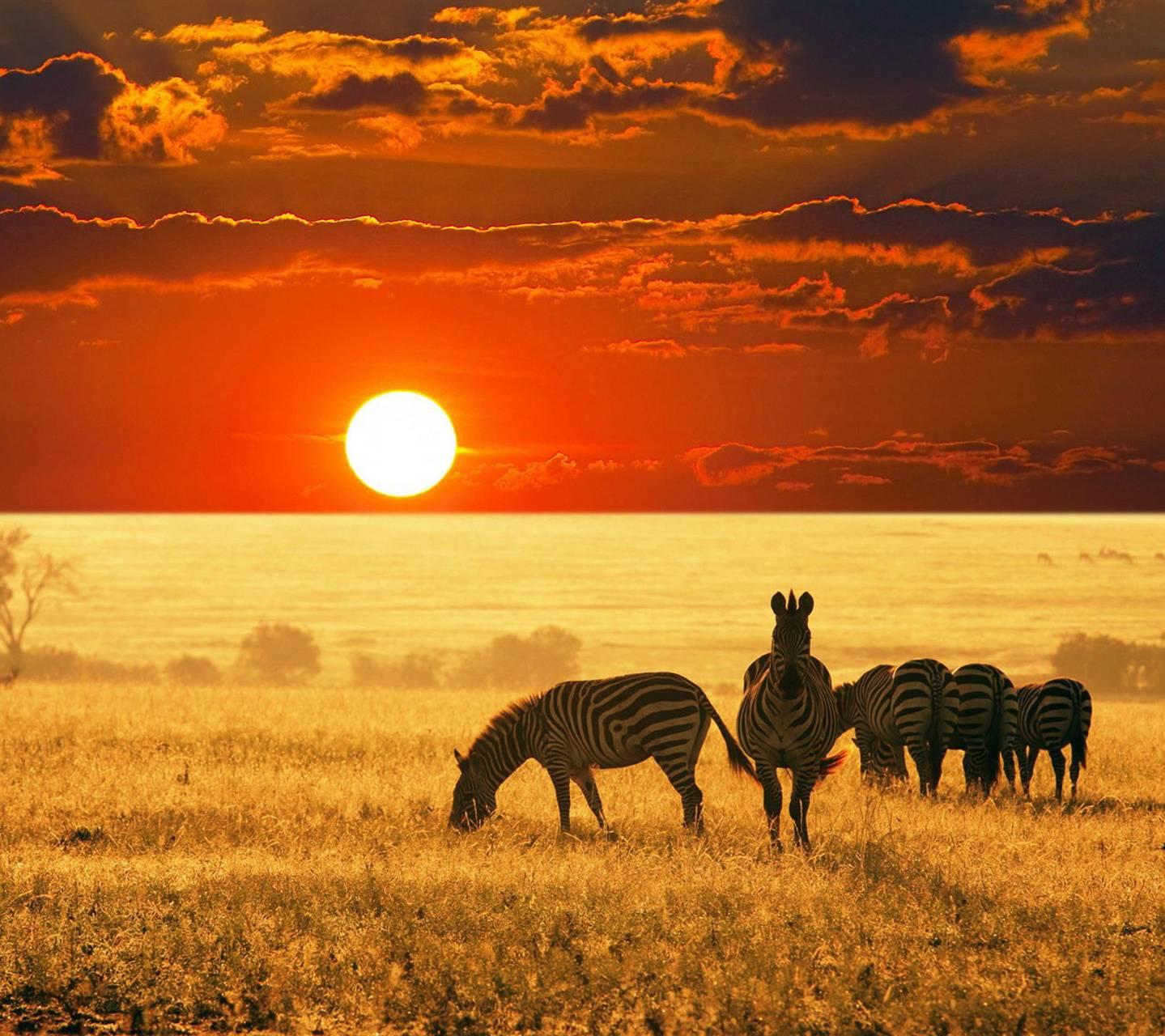 Sunrise And Zebras