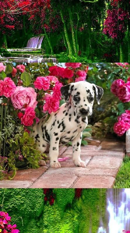Flower Spotter
