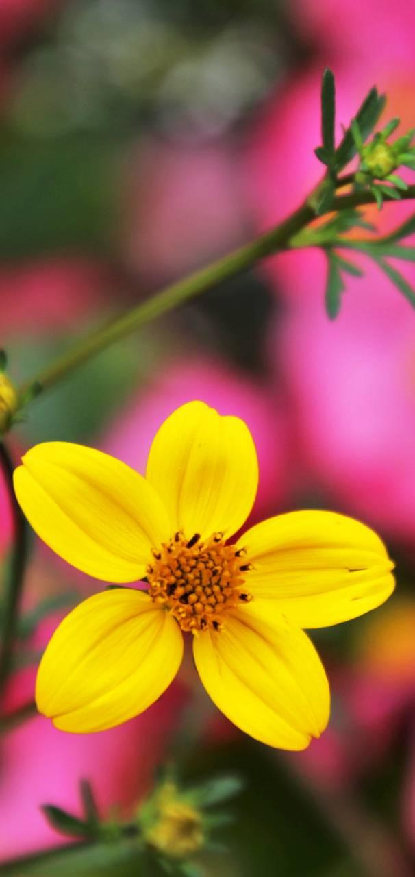Flower Yellow 3